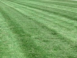 EverGreen Lawn Care Omaha, IL